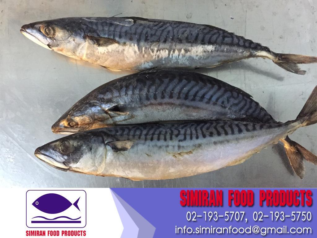 ปลาซาบะ นอร์เวย์ (แช่แข็ง) Size 600+