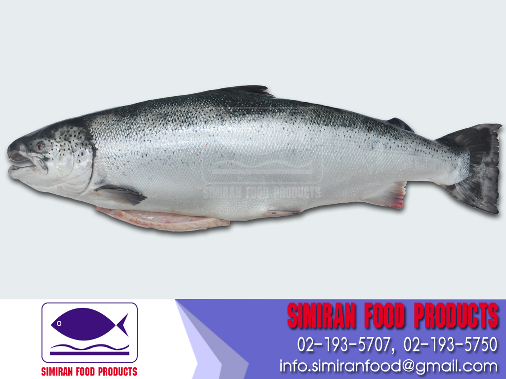 Fresh Salmon from Norway 16kg UP